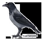 Hooded crow pixel by makangeni
