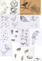 Sketch dump 4 by makangeni
