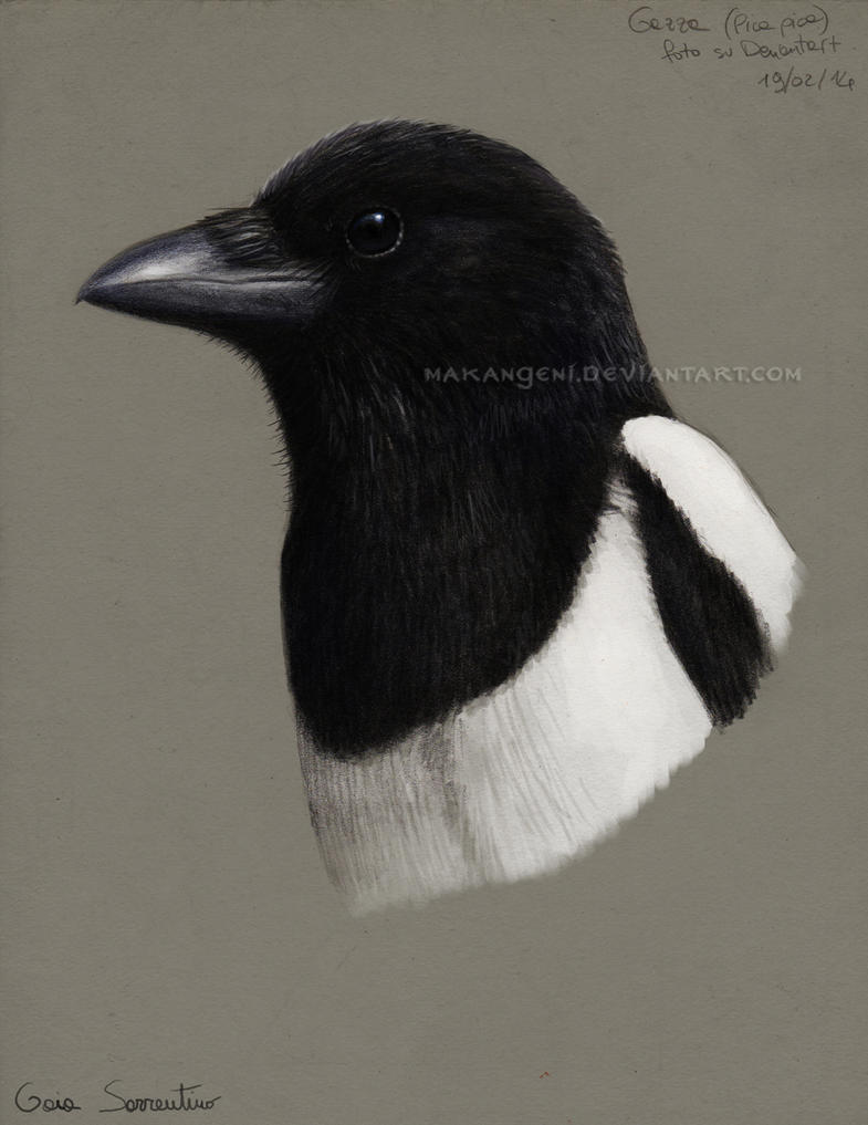 Magpie portrait by makangeni