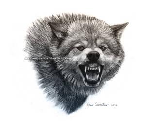 Snarling Wolf by makangeni