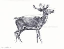 Red Deer sketch by makangeni