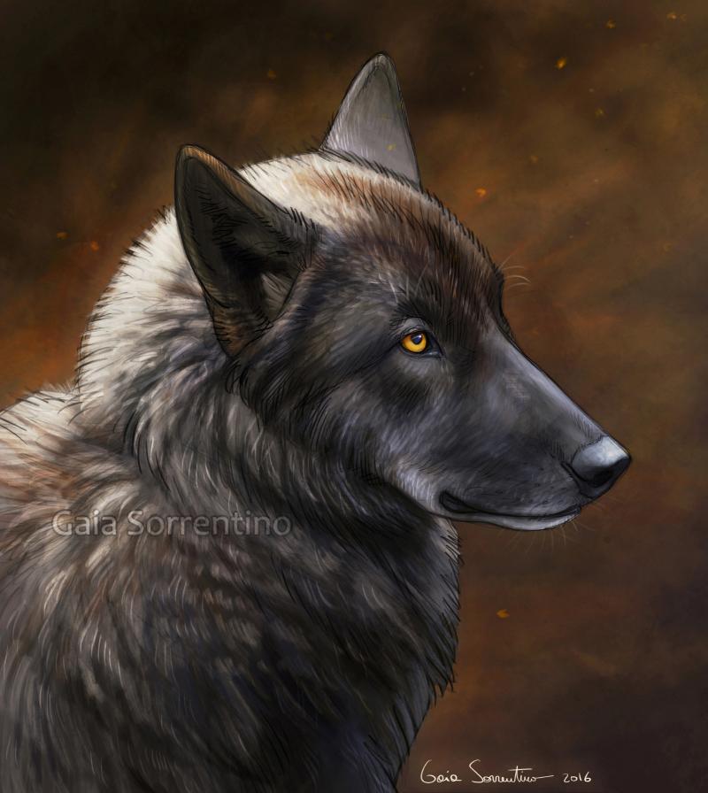 Black wolf by makangeni