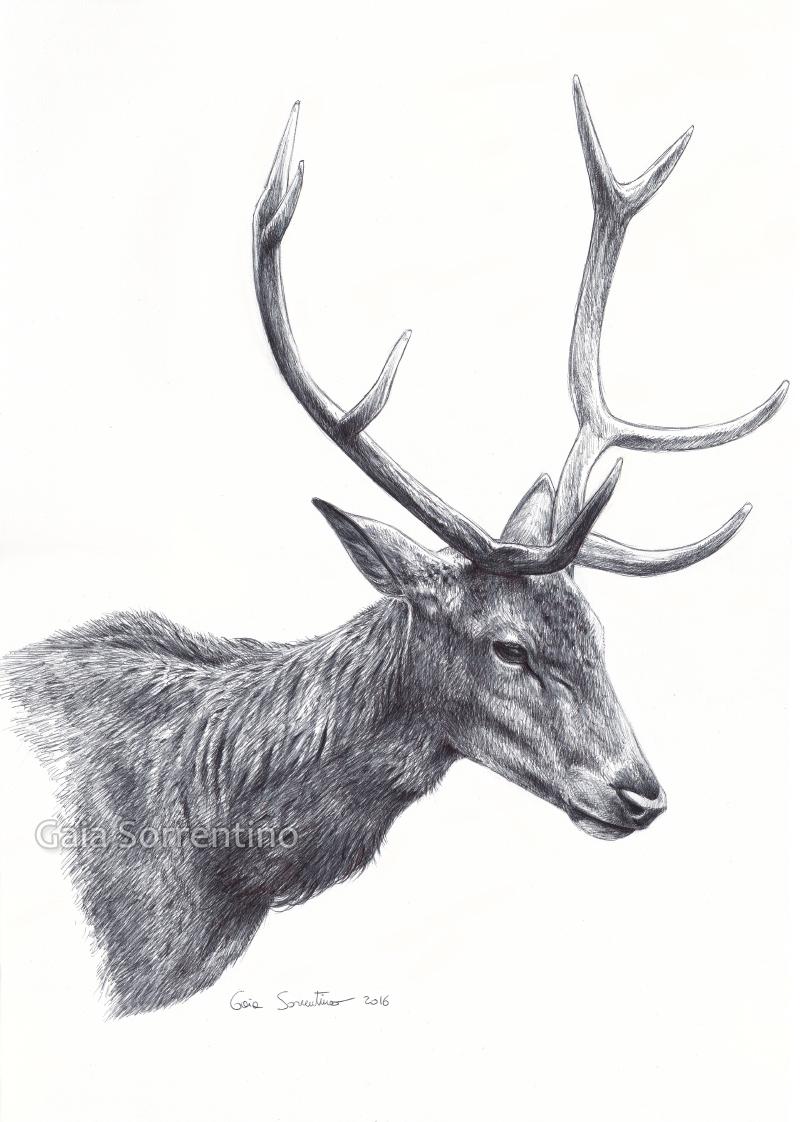 Red Deer portrait by makangeni