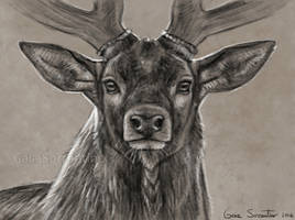 Red Deer II by makangeni