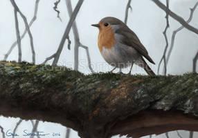 Robin by makangeni