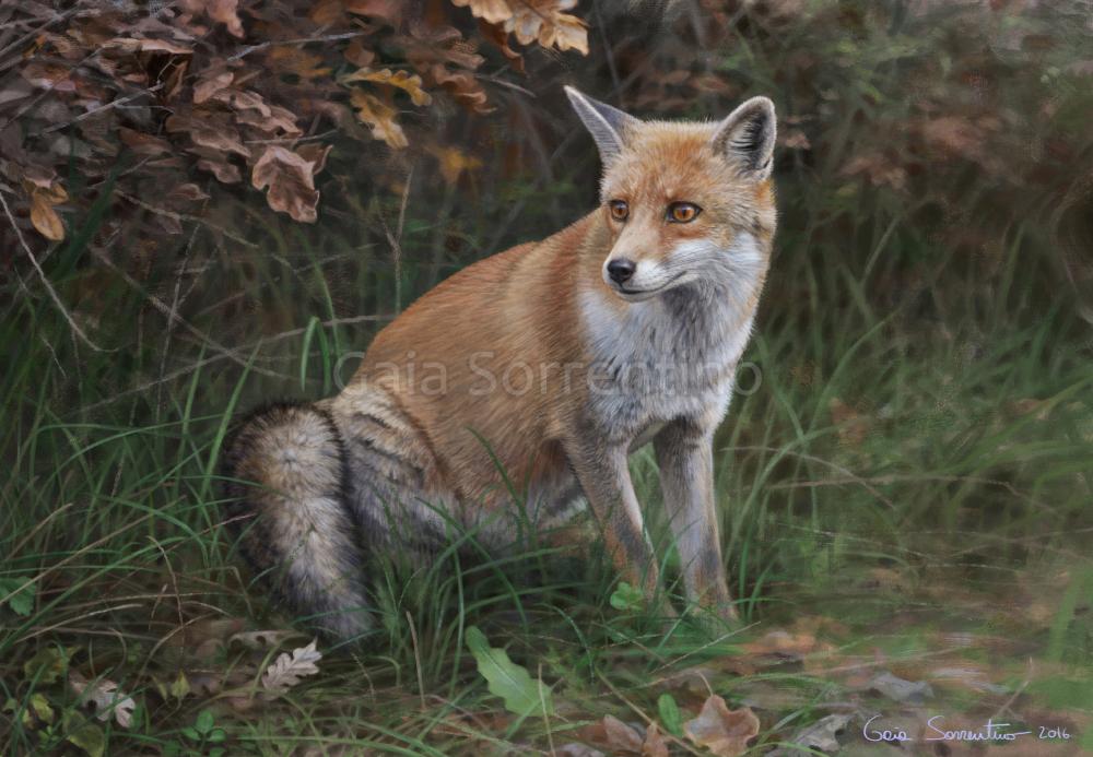 Fox by makangeni