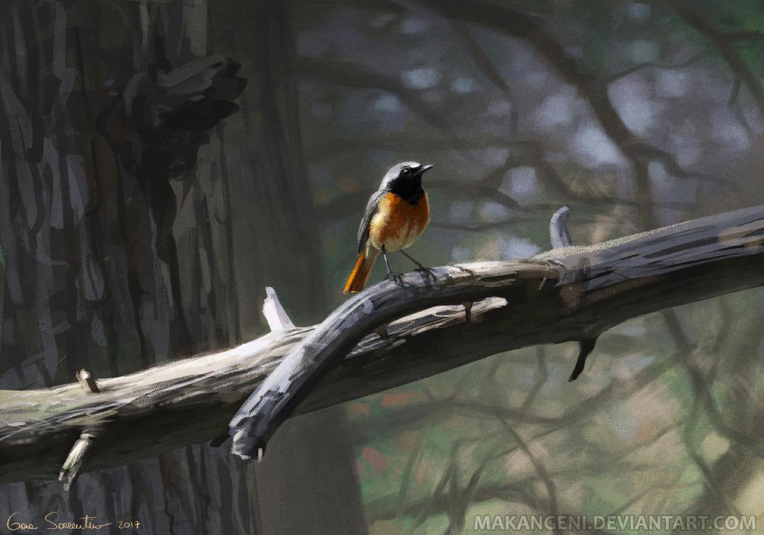 Common Redstart by makangeni