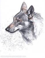 Wolf study by makangeni