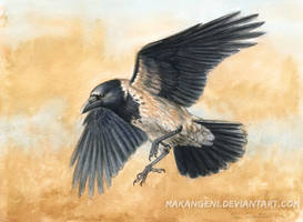 Hooded Crow watercolor by makangeni