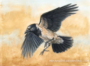 Hooded Crow watercolor