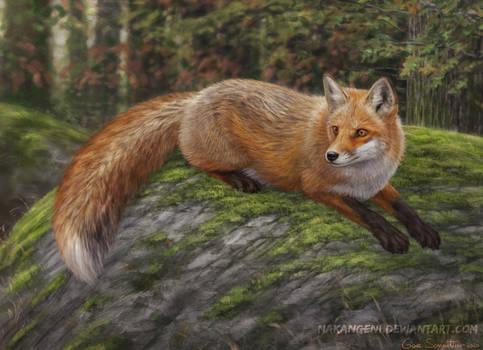 Fox on mossy rock