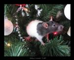 Asher, Christmas Rat by PhoenixAshesRats