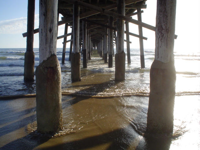 Under Newport Beach Pier. by lynduh