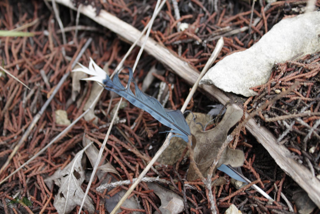 Blue Jay Feather by DeepSlackerJazz