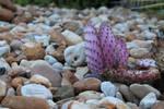 Purple Cactus W/ Pebbles