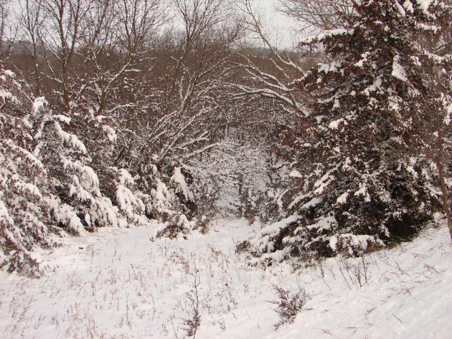 Wintery Walkway by CyberCream