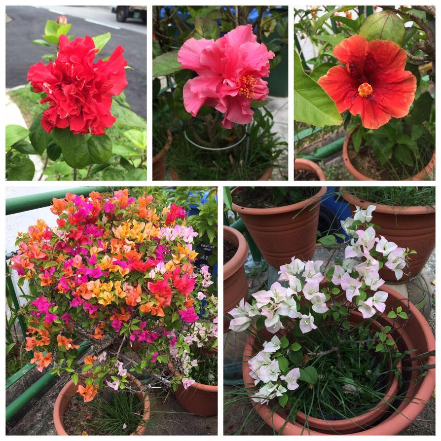 Flowers By Theanimeguy1 On Deviantart