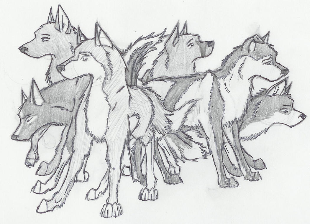 Wolf Pack Drawings In Pencil