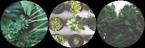 plants | f2u decor by toff-u