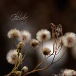 ghemotoc by FlorinALF