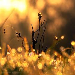 baie'n'soare by FlorinALF