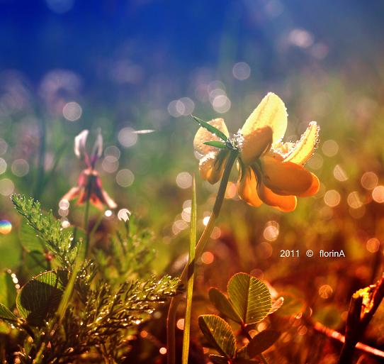 in the sunrays by FlorinALF