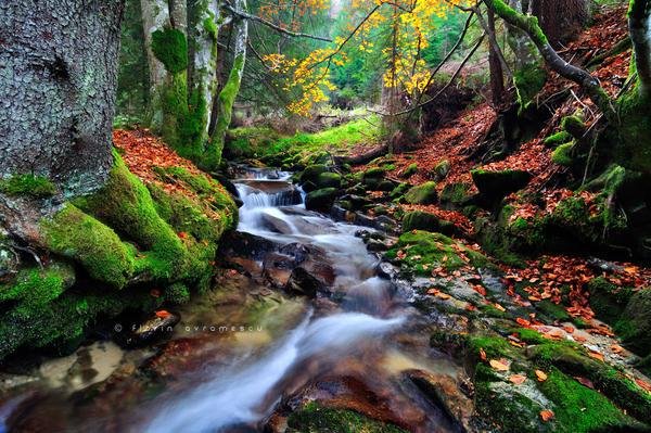 Autumn dance by FlorinALF