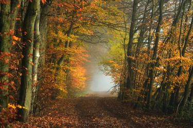 German Autumn forest