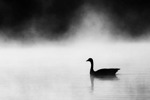 The mysterious goose