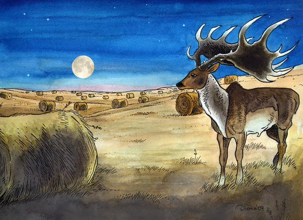 Irish Elk on the fields by DianaKennedy
