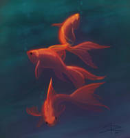 Gold fish by Sabinerich