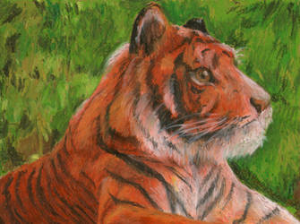 Tiger portrait by Rayquazanera