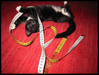Play Cat by kittyvane