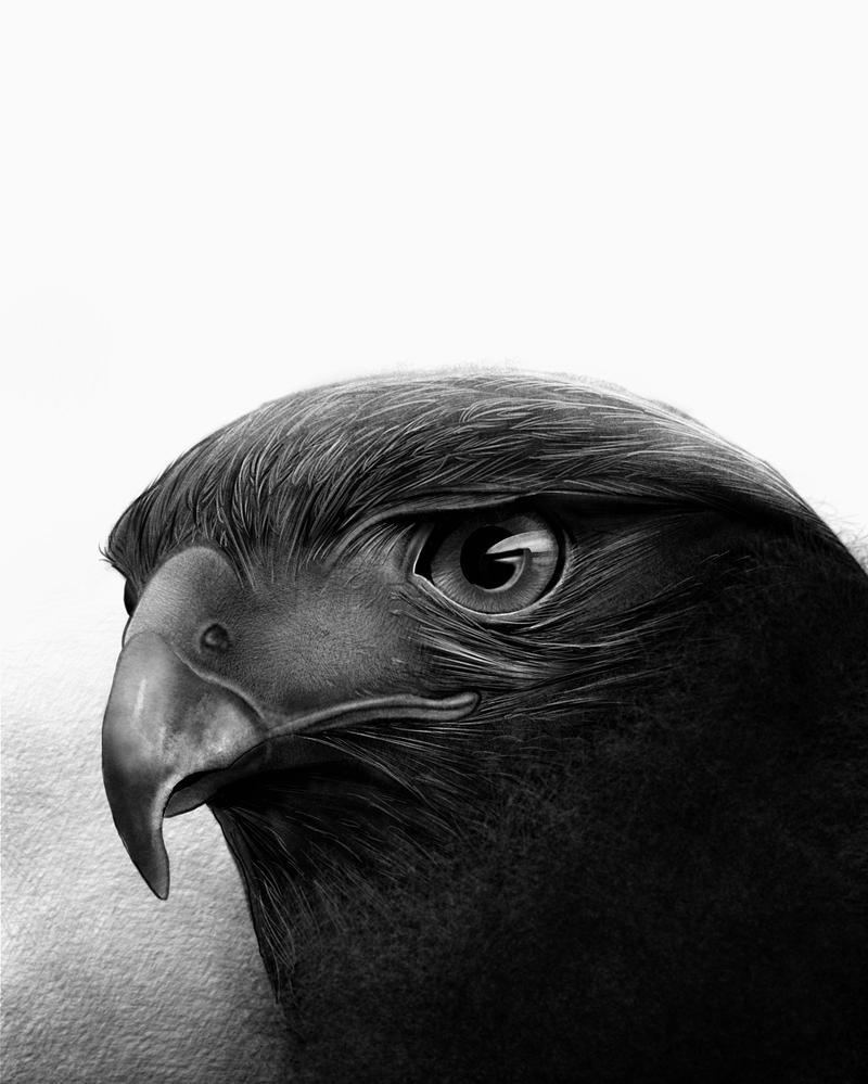The Hawk by kevbot117