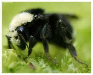 Bee of Patience