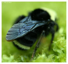 A Bees Fingerprint by DJ-Mech