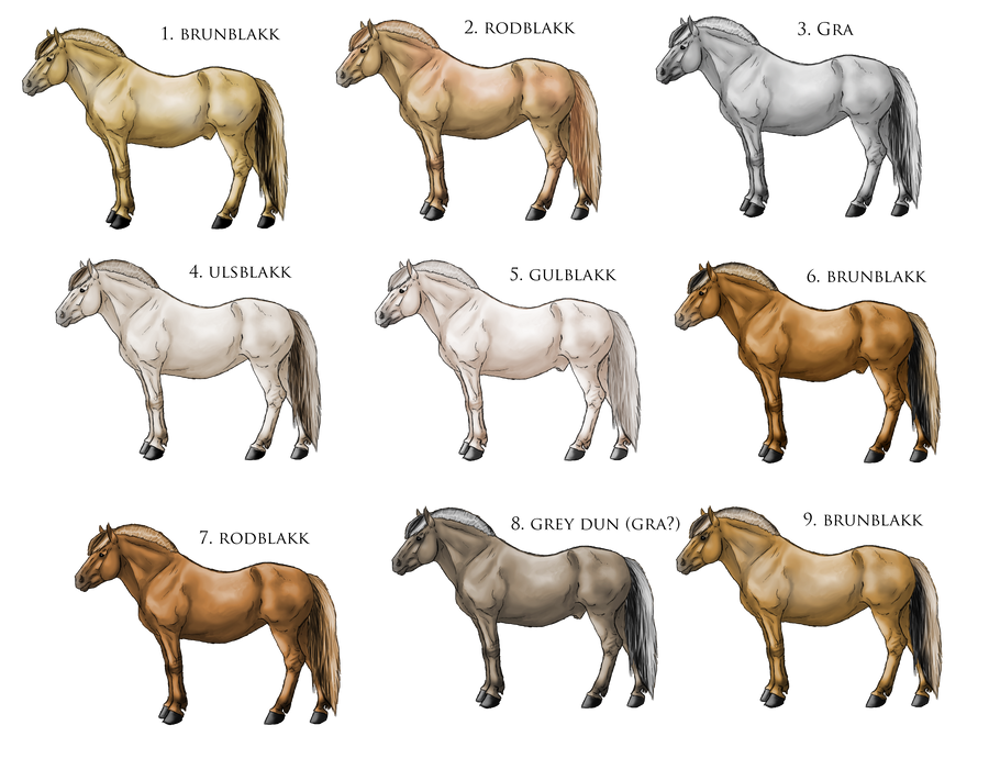 Horse breeds with pictures and names