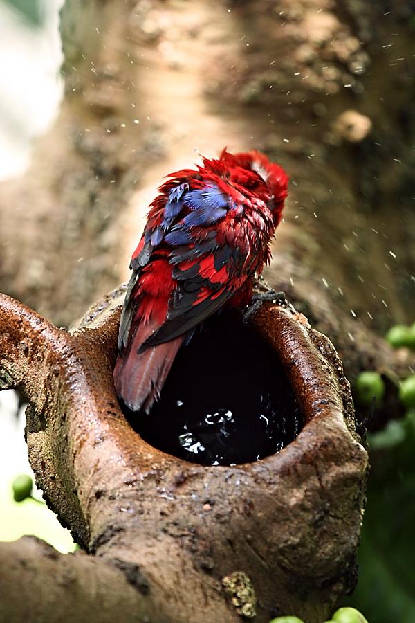 Bath time by juhku