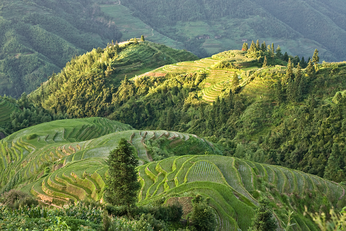 Rice fields by juhku