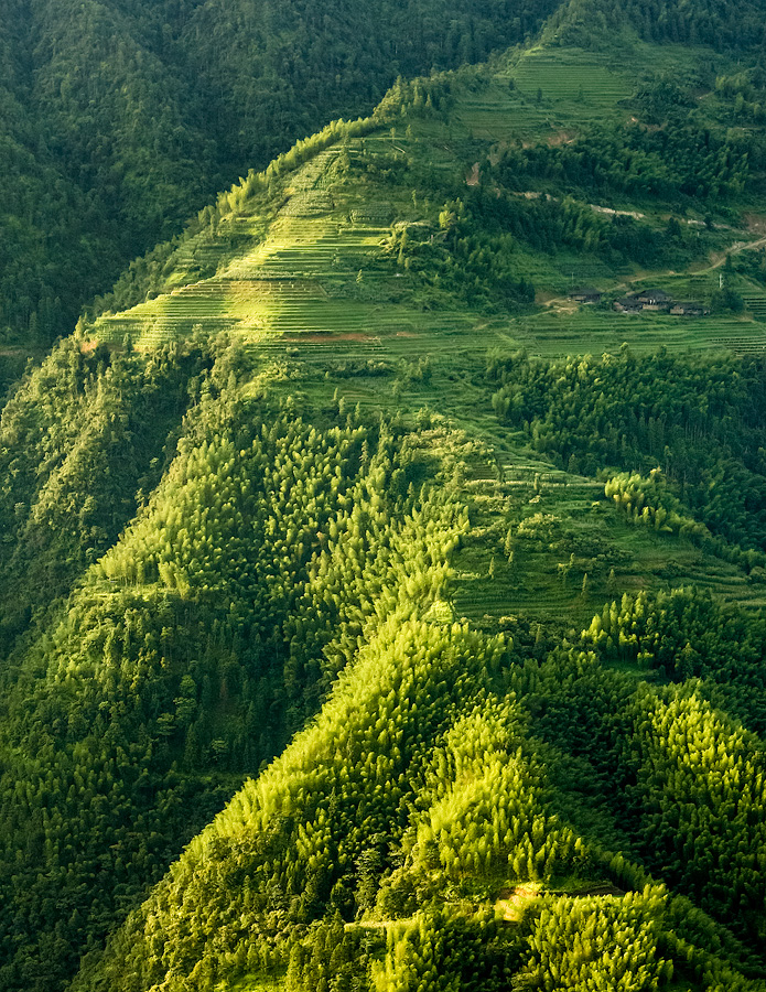 Rice terraces and bamboo forest by juhku
