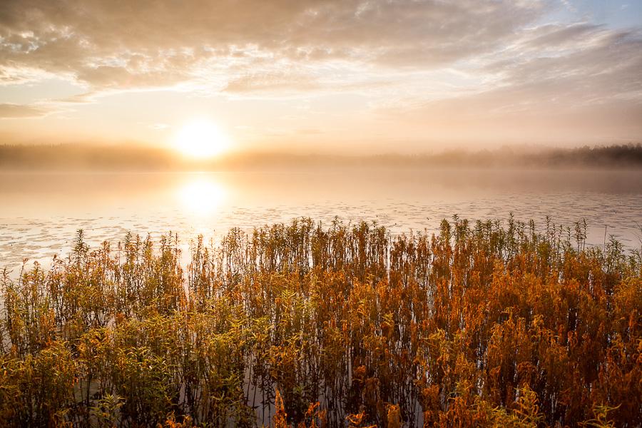 Morning light by juhku