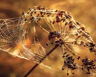 Web dew by JuhaniViitanen