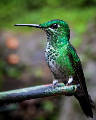 Hummingbird by JuhaniViitanen