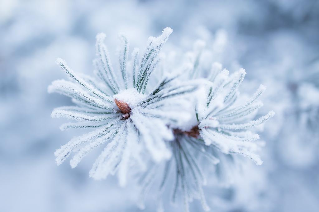 Winter flower by JuhaniViitanen