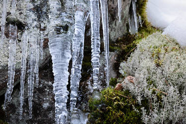 Icicles in the forest