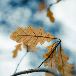 Dry leaves 2 by JuhaniViitanen