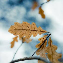 Dry leaves 2