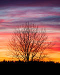 Sunset sky and tree