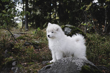 Kaiku in the forest by JuhaniViitanen