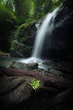 Waterfall and fern